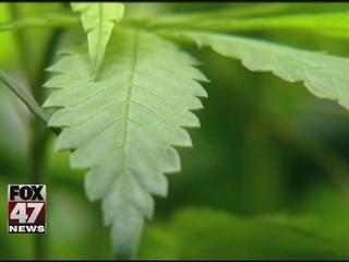 Medical marijuana dispensaries go unregulated