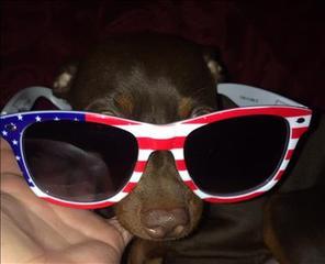YES! Pics: Patriotic Pets