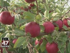 Michigan expecting record apple harvest