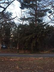 PHOTOS: Viewers share photos of wind wind damage