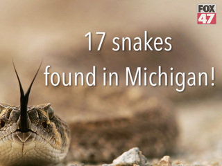 17 snakes found in Michigan