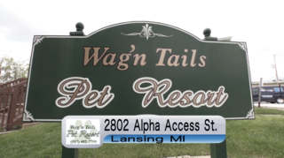 LOOK LIVE: Wag 'N Tails