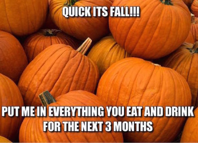 1412393417000 fall meme 4_1444669453039_25113332_ver1.0_640_480 funny memes to celebrate fall fox 47 news wsym lansing, jackson