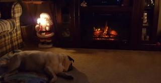 Yes! Pics: Pets with Santa