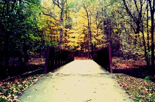 Yes! Pics: Fall Foliage
