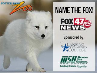Name the Fox!