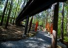 Michigan canopy walk to open this year